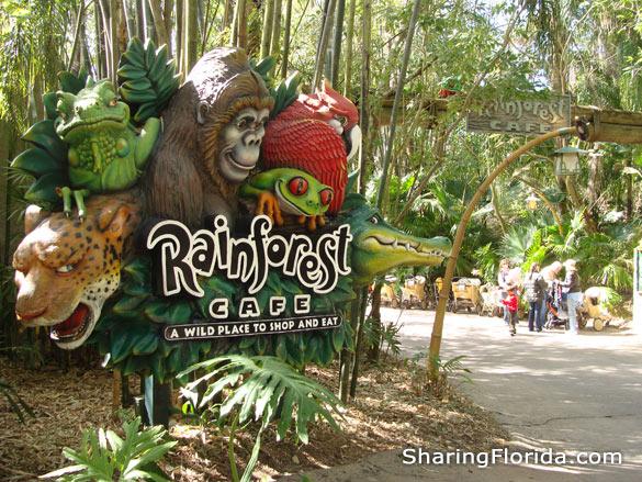 Animal Kingdom Rainforest Cafe Reviews