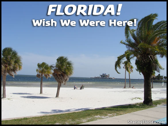 Are You Thinking Wish We Where Here Picture Of Palm Trees On The Beach In Florida