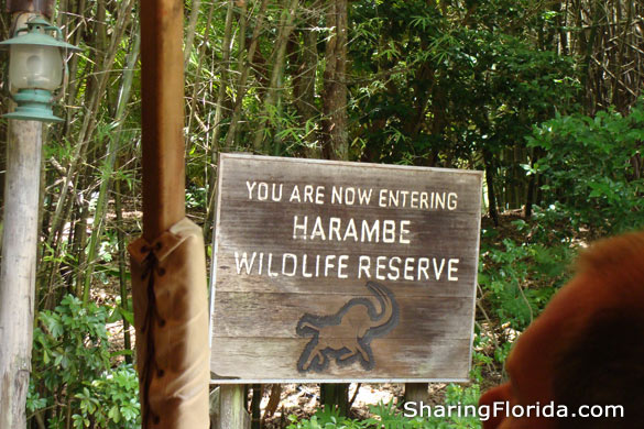 Harambe Wildlife Reserve At Animal Kingdom Pictures Of