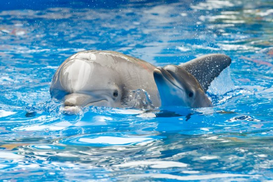 Baby Dolphin Born at Sea World Orlando